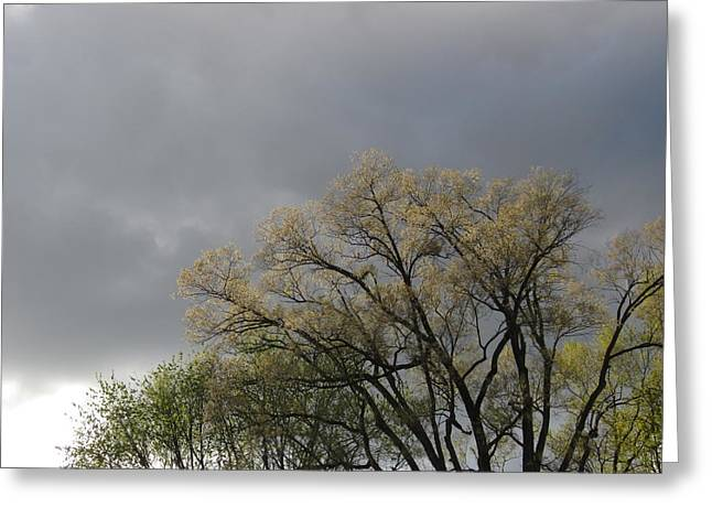 Guy Ricketts Photography Greeting Cards - Summer Shower Greeting Card by Guy Ricketts