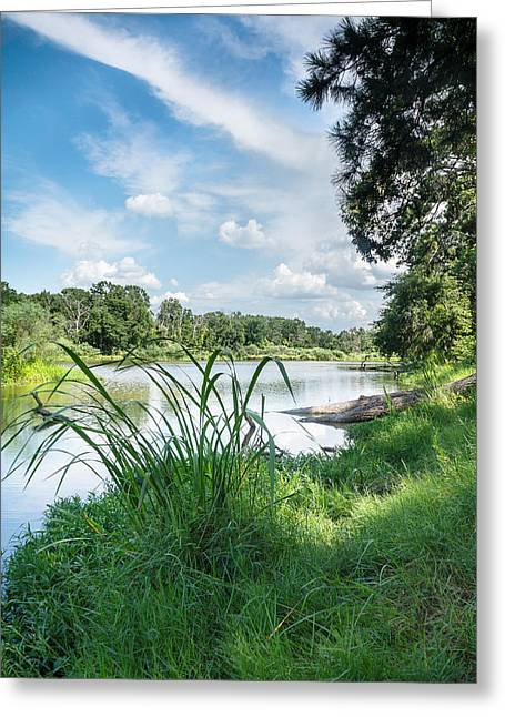 Hiking Greeting Cards - Summer Sky and Stubblefield waterplants Greeting Card by Ellie Teramoto
