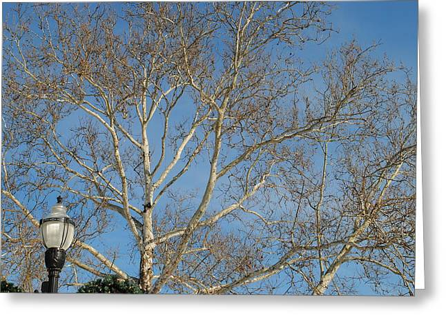 Lightposts Greeting Cards - Summer Sky Winter Day Greeting Card by Frozen in Time Fine Art Photography