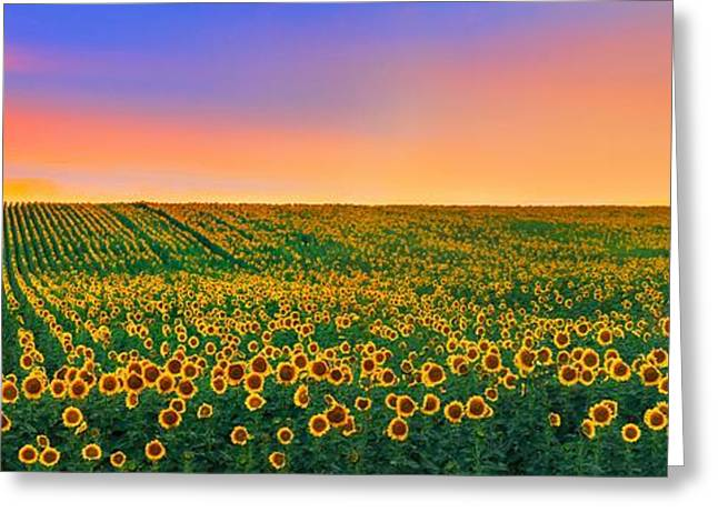 Yellow Sunflower Greeting Cards - Summer Slumber Greeting Card by Kadek Susanto