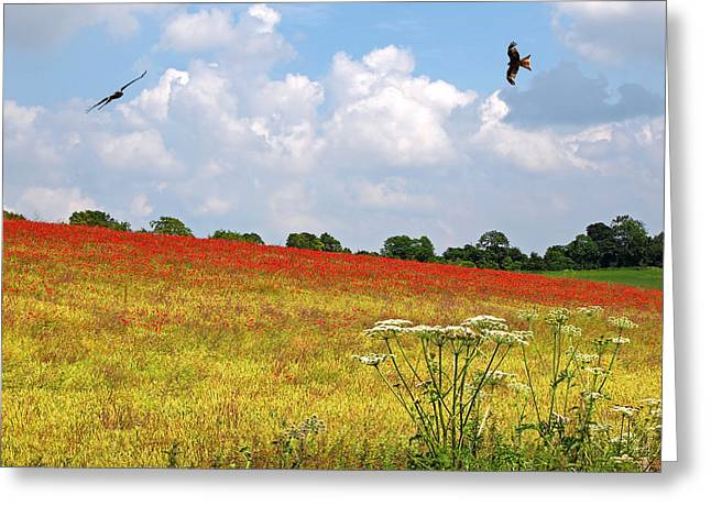 Summer Spectacular - Red Kites Over Poppy Fields Greeting Card by Gill Billington