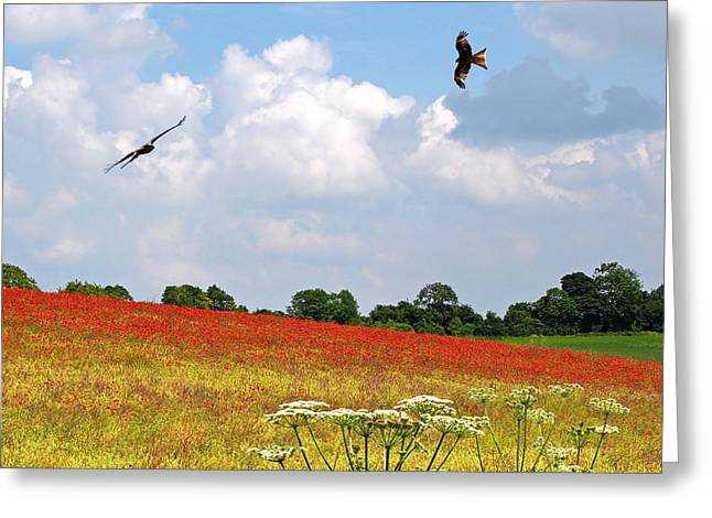 Summer Spectacular - Red Kites Over Poppy Fields - Square Greeting Card by Gill Billington