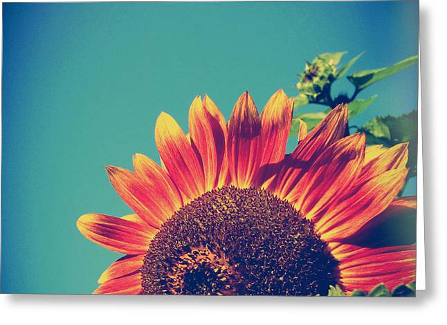 Joy Stclaire Greeting Cards - Summer Sunflower Greeting Card by Joy StClaire