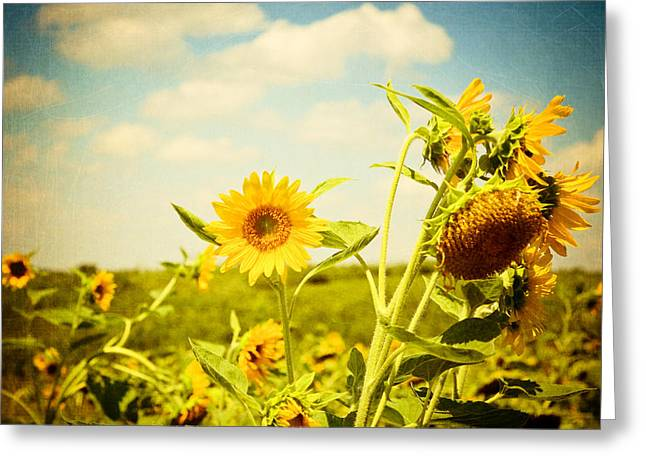 Joy Stclaire Greeting Cards - Summer Sunflowers Greeting Card by Joy StClaire