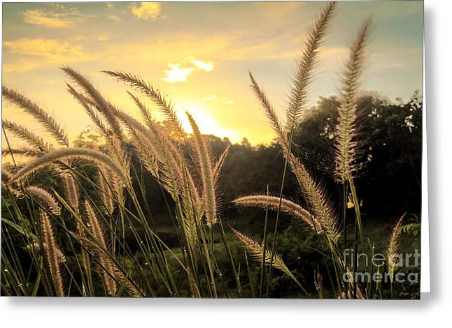 Nature Scene Greeting Cards - Summer Sunrise Greeting Card by Niphon Chanthana