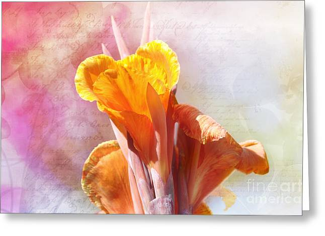 Canna Mixed Media Greeting Cards - Summer Sunset Greeting Card by Elaine Manley