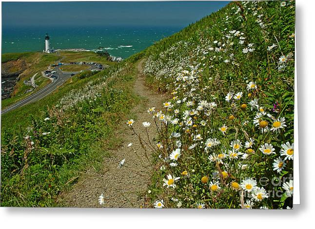 Pacificnorthwest Greeting Cards - Summer Time At Yaquina Head Greeting Card by Nick  Boren