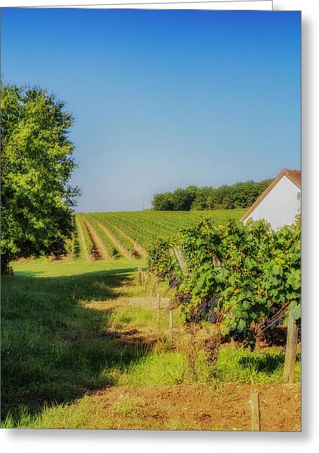 Grapevine Leaf Greeting Cards - Summer Vineyard Greeting Card by Nomad Art And  Design