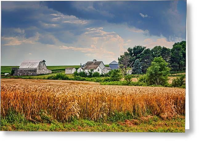 Outbuildings Greeting Cards - Summer Wheat - Nebraska Farm Greeting Card by Nikolyn McDonald