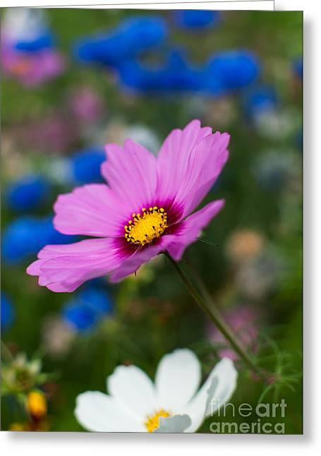Wimbledon Photographs Greeting Cards - Summer Wild Blooms Greeting Card by Matt Malloy