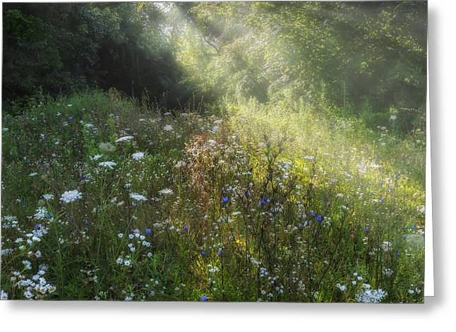 Sunrays Greeting Cards - Summer WIldflowers Greeting Card by Bill  Wakeley