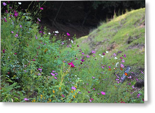 Photographs Digital Art Greeting Cards - Summer Wildflowers II Greeting Card by Suzanne Gaff