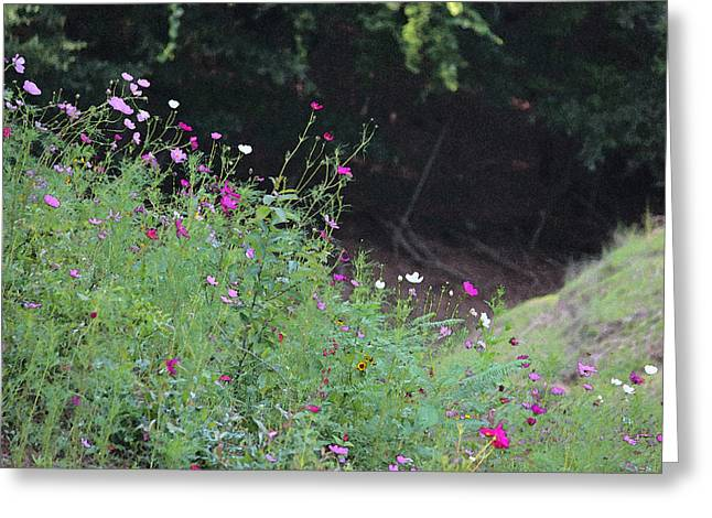 Photographs Digital Art Greeting Cards - Summer Wildflowers III Greeting Card by Suzanne Gaff