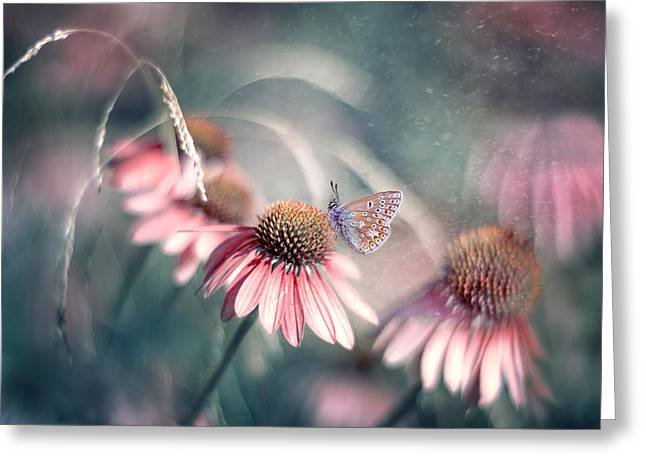 Blooms Greeting Cards - Summer Wonderland Greeting Card by Magda  Bognar