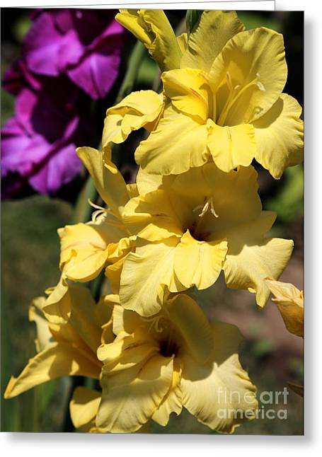 Gladiolas Greeting Cards - Summer Yellow and Purple Glads Greeting Card by Carol Groenen