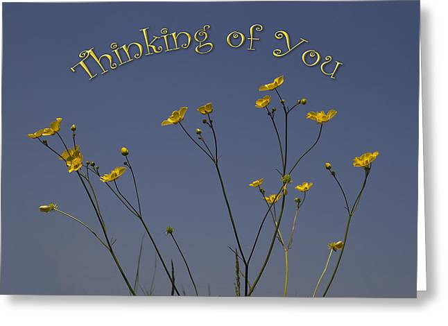 Flowers Against The Sky Greeting Cards - Summers days Greeting Card by Shirley Mitchell