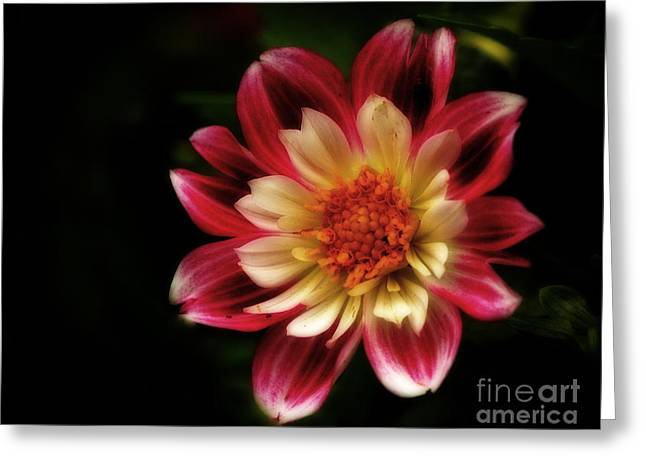 Summers Dream - Awaiting Pollination Greeting Card by Inspired Nature Photography Fine Art Photography