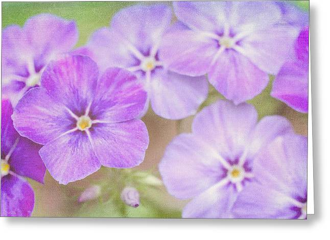 Florescence Greeting Cards - Summers Love Greeting Card by Heidi Smith