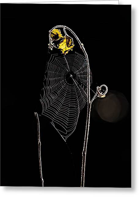 Spider Web Greeting Cards - Summers Web Before Sunrise Greeting Card by Bob Orsillo