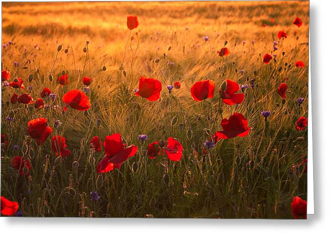 Springflowers Greeting Cards - Summertime Blues Greeting Card by Steffen Gierok