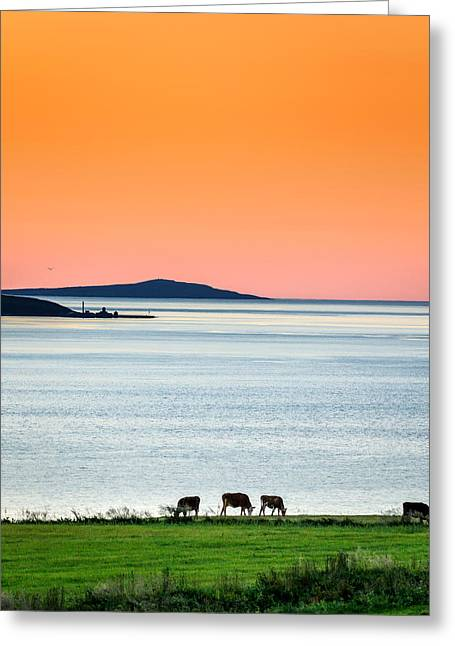 Cow Images Greeting Cards - Summertime In Iceland With The Midnight Greeting Card by Panoramic Images