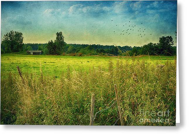 Shed Digital Greeting Cards - Summertime Greeting Card by Jutta Maria Pusl