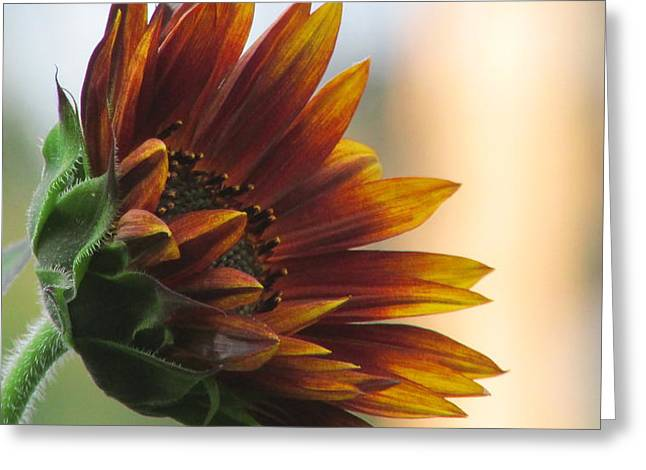 Summertime Sunflower Greeting Card by Debra Madonna