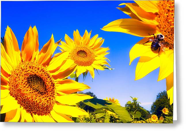 Art Decor Greeting Cards - Summertime Sunflowers Greeting Card by Bob Orsillo