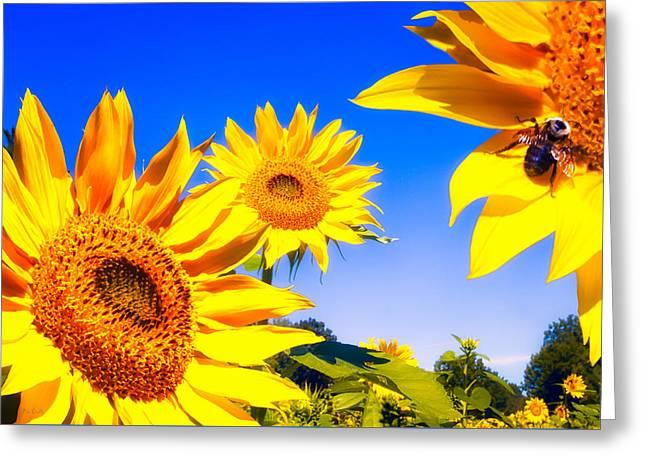 Bob Orsillo Greeting Cards - Summertime Sunflowers Greeting Card by Bob Orsillo