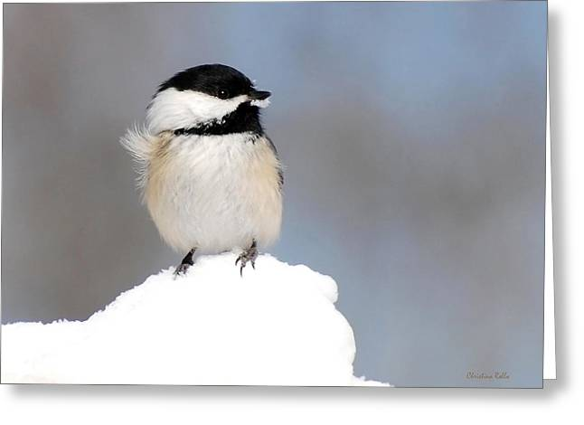 Bird Summit Greeting Cards - Summit - Black-Capped Chickadee Greeting Card by Christina Rollo