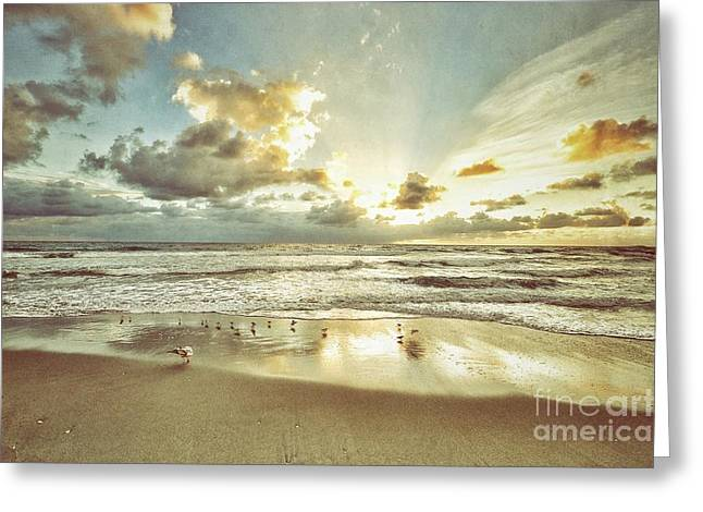 Seabirds Greeting Cards - Sun and Birds in Boca Raton Greeting Card by Brandi Fitzgerald