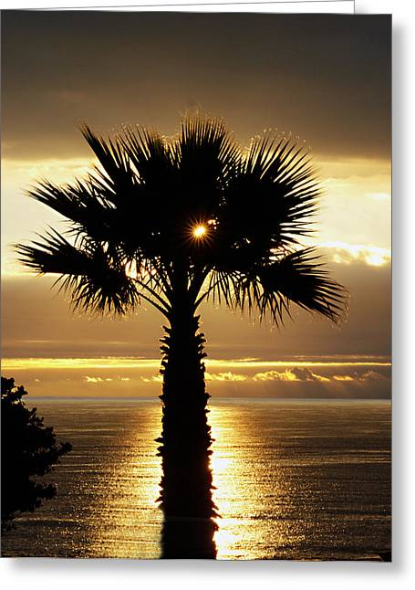 Pacfic Ocean Greeting Cards - Sun and Palm and Sea Greeting Card by Joe Schofield
