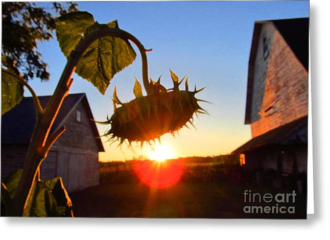 Indiana Flowers Greeting Cards - Sun and Sunflower Greeting Card by Tina M Wenger