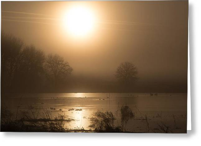 Wildlife Refuge. Greeting Cards - Sun Greeting Card by Angie Vogel