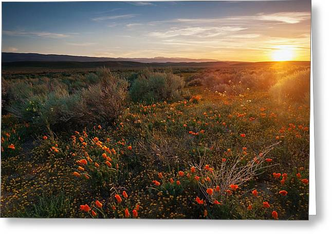 Quite Greeting Cards - Sun Bath Greeting Card by Aron Kearney Fine Art Photography