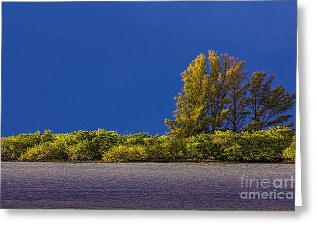 Power Plants Greeting Cards - Sun Bathed Greeting Card by Marvin Spates