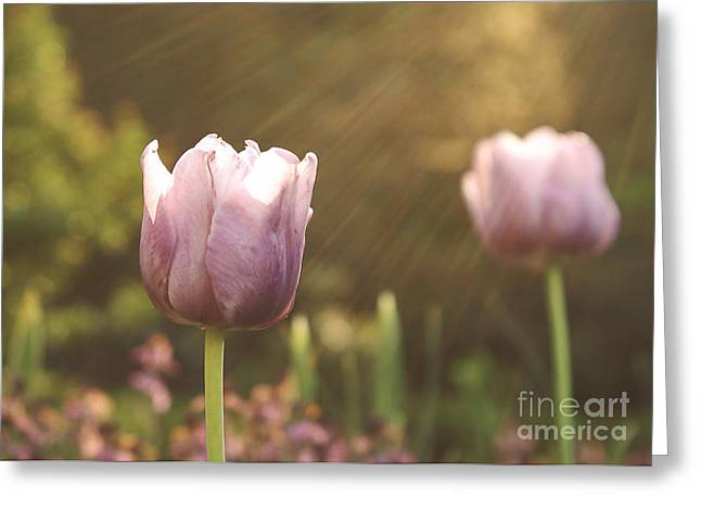 Mother Gift Photographs Greeting Cards - Sun Bathing Greeting Card by Emily Kay