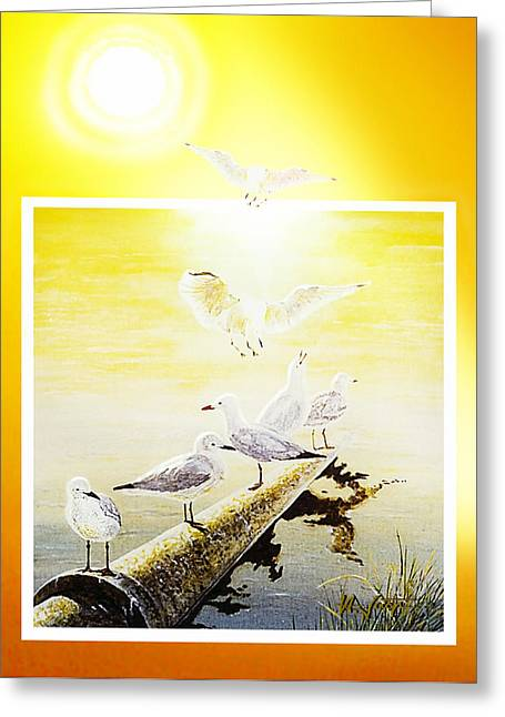 Flying Seagull Greeting Cards - Sun Birds Greeting Card by Hartmut Jager