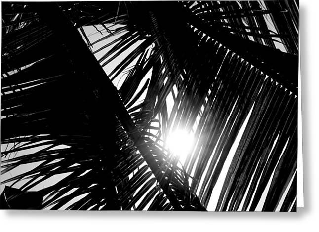 Jamaican Sunset Greeting Cards - Sun Breaking Through Palm Trees Greeting Card by Shaun Maclellan