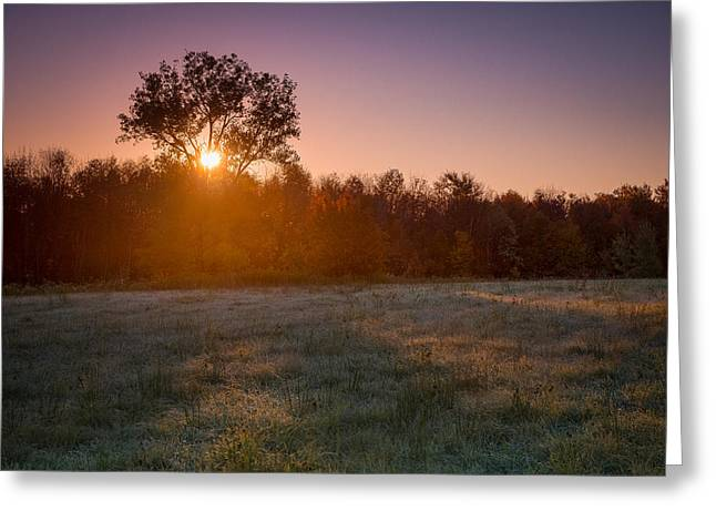 Sunrise Greeting Cards - Sun breaks through an Oak Greeting Card by Chris Bordeleau