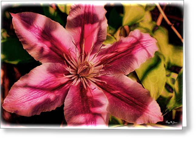 Overhang Digital Art Greeting Cards - Flower - Bloom - Sun Dappled Clematis Greeting Card by Barry Jones