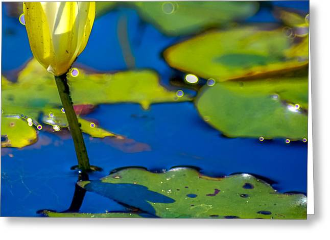 Recently Sold -  - Fish Digital Art Greeting Cards - Sun drenched Lilly  Greeting Card by Optical Playground By MP Ray