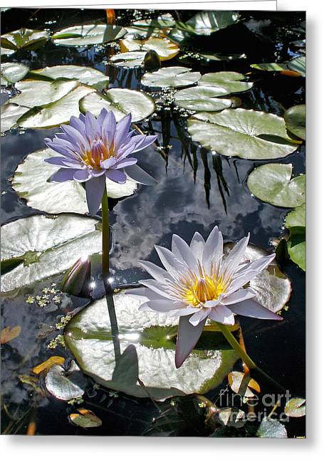 Sun-drenched Lily Pond         Greeting Card by Kaye Menner