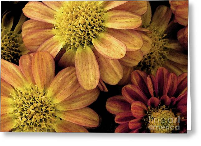 Nature Greeting Cards - Sun Fans Greeting Card by Jean OKeeffe Macro Abundance Art
