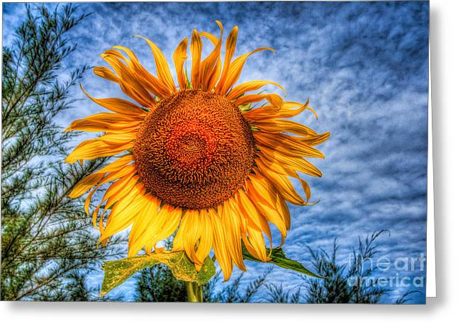 Green Leafs Greeting Cards - Sun Flower Greeting Card by Adrian Evans