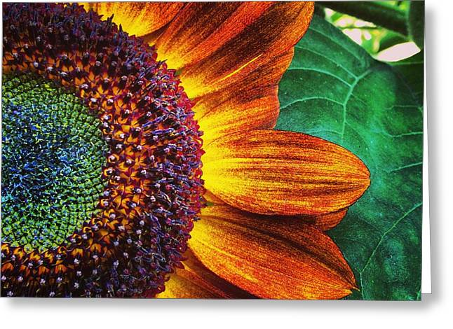 Flowers Photographs Greeting Cards - Sun flower Greeting Card by Jeff Klingler