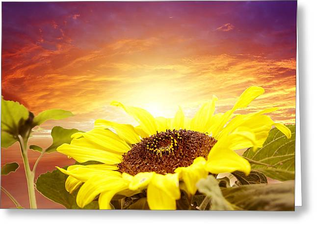 Beauty In Nature Greeting Cards - Sun flower Greeting Card by Les Cunliffe