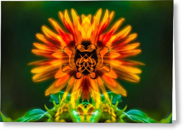 Owfotografik Greeting Cards - Sun Flower Rising Greeting Card by Omaste Witkowski