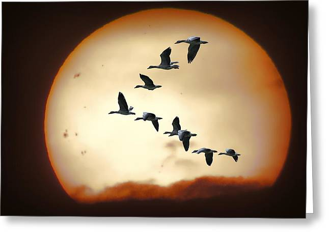 Flying Geese Greeting Cards - Sun Geese Greeting Card by Daniel Hagerman
