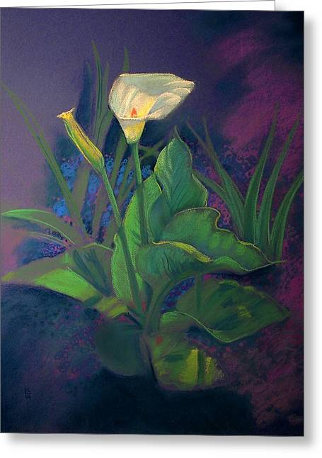 Calla Lily Pastels Greeting Cards - Sun Glowing Calla Greeting Card by Kent Looft